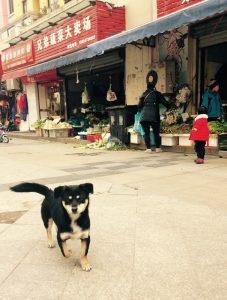街の招财狗(Zhāo cái gǒu):招き犬