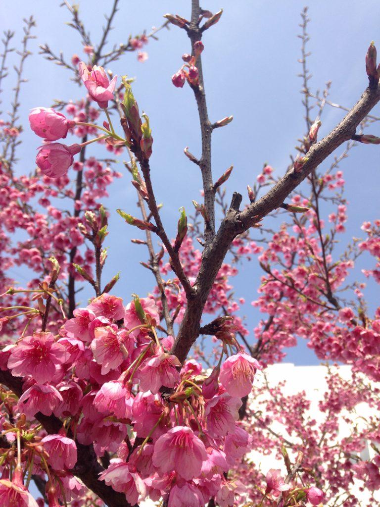 春天到来(Chūntiān dàolái)