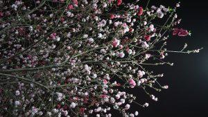 「源平桜」かな