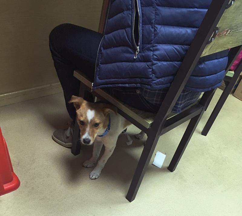 椅子の下からニーハオ