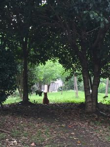 树荫下(Shù yīn xià)的猫