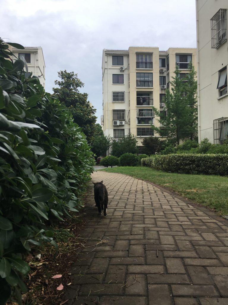 猫の散歩道(Sànbùdào)