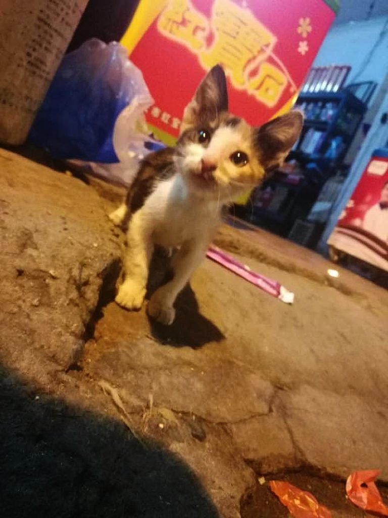 小猫咪(Xiǎo māomī)