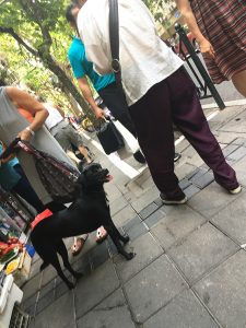 黒狗(Hēi gǒu:クロイヌ)