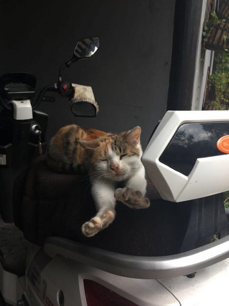 農民画村のお昼寝猫