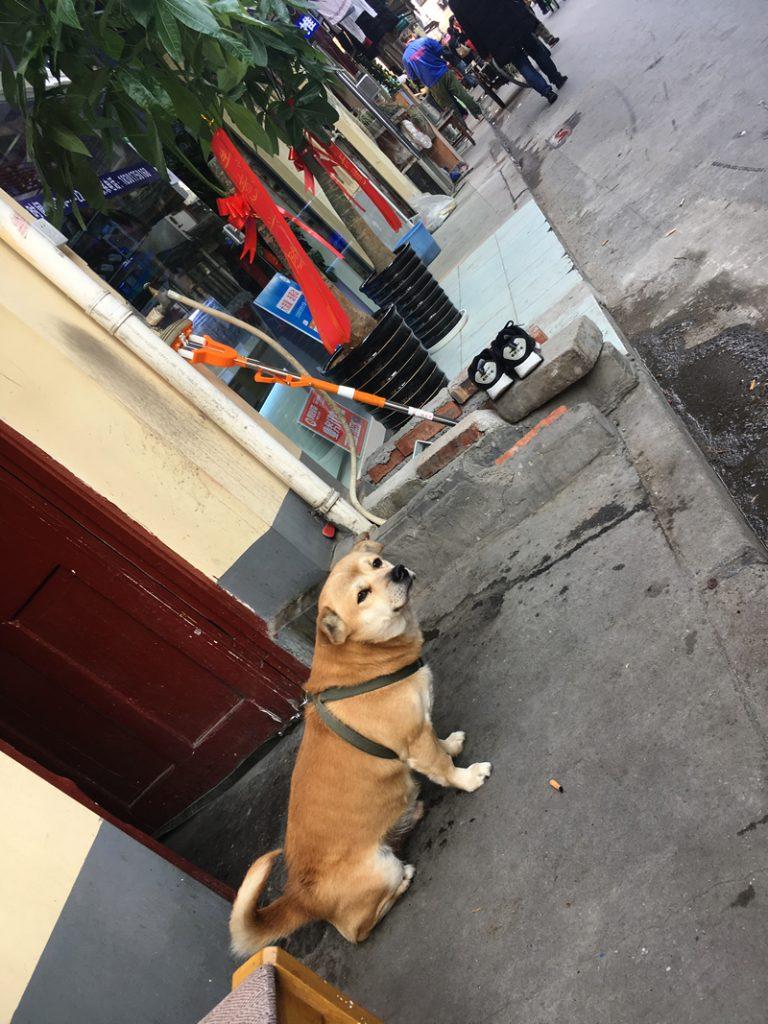 今天的狗步步