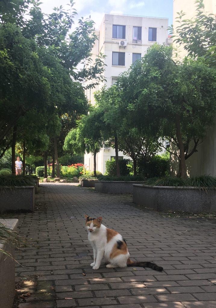 今日の上海猫歩歩